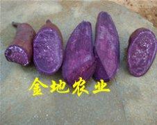紫薯_紫红薯产品图片
