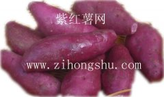 紫红薯种植产品图片