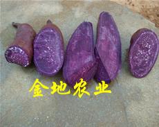 紫红薯图片