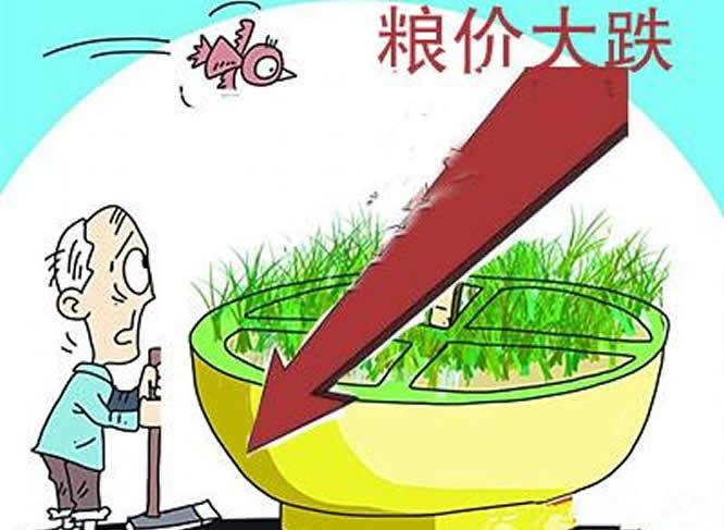 玉米价格下跌了多少