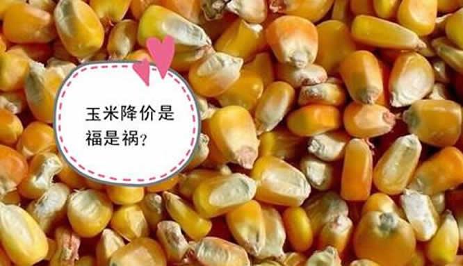 玉米价格下跌