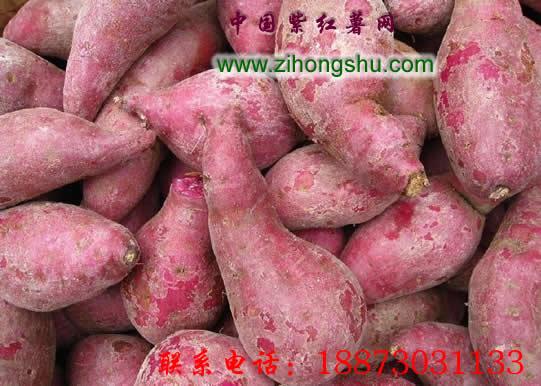 2015年紫薯种批发_紫红薯种批发