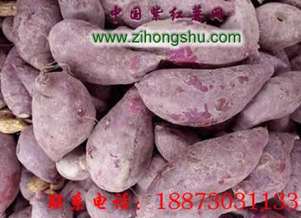 紫薯种的选购