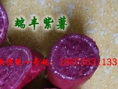 端丰紫薯种紫薯苗_新鲜紫薯批发